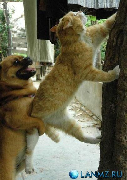 Lanmz - Форум Гиков - Показать сообщение отдельно - Забавные фото животных.
